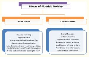 Effects of fluoride toxicity